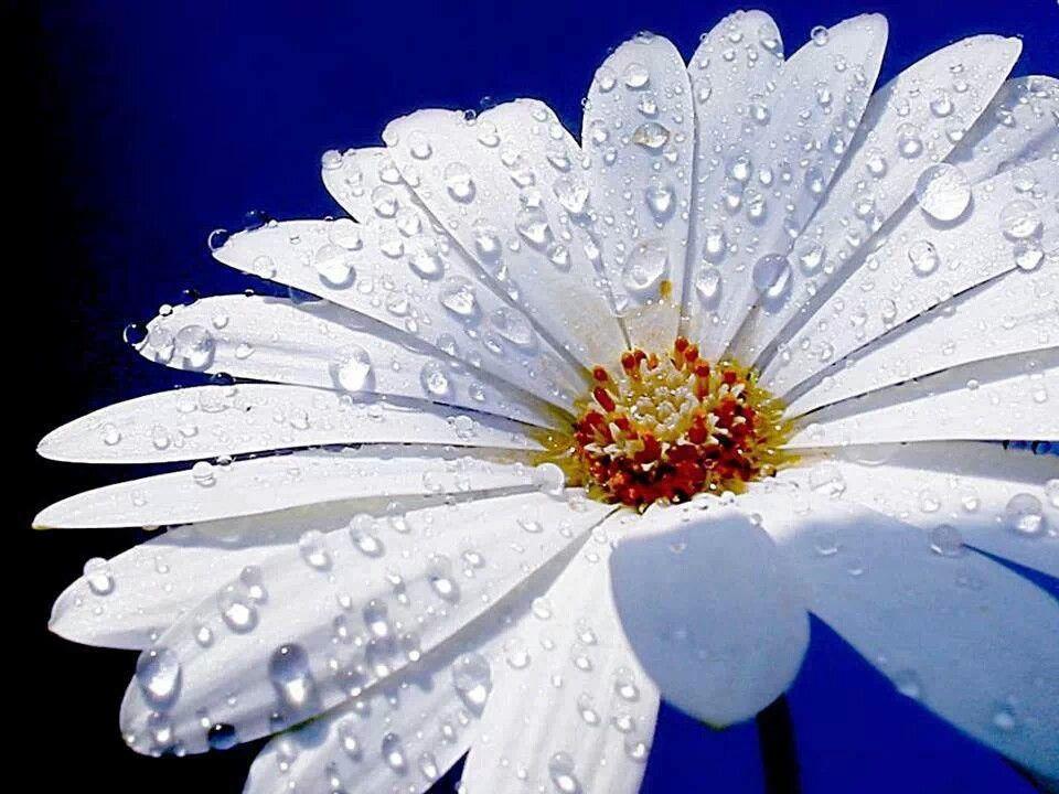 Flor hermosa.
