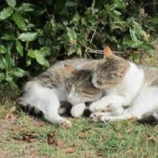 Cretaiole cats; we got to see one of the mama cats deliver four kittens during our stay!