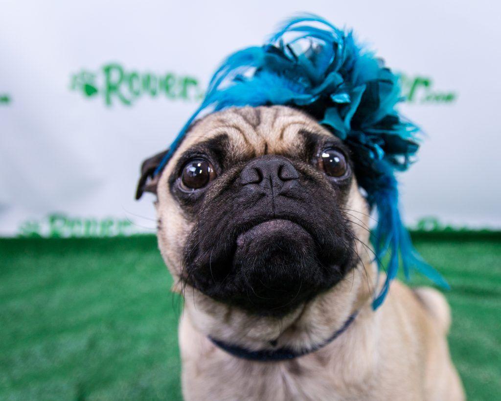Dogs In Stylish Hats Recreate Classic Kentucky Derby Looks