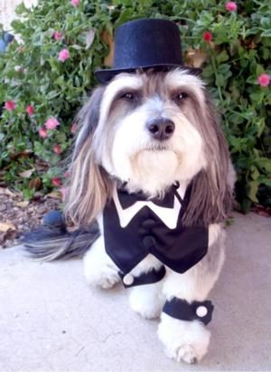 Dog Top Hat At Baxterboo Dog Clothes Pet Costumes Dogs