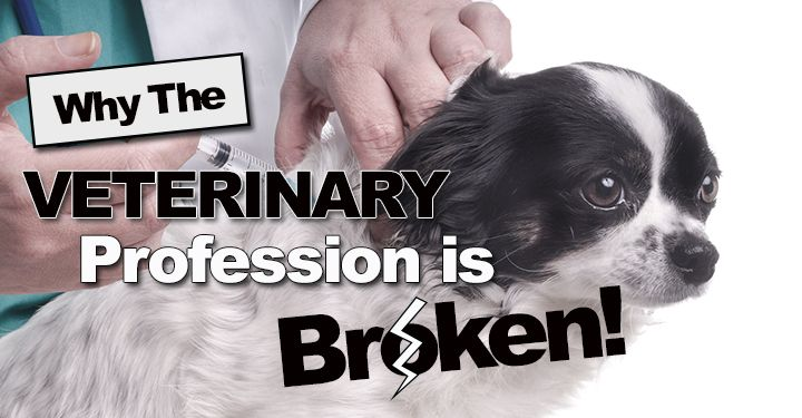 Pin On Pets Other Domestics