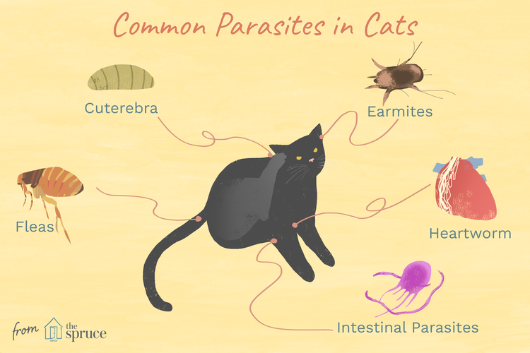 What Kinds Of Parasites Can Cats Get In 2020 Flea Control For Cats Fleas Cat Skin
