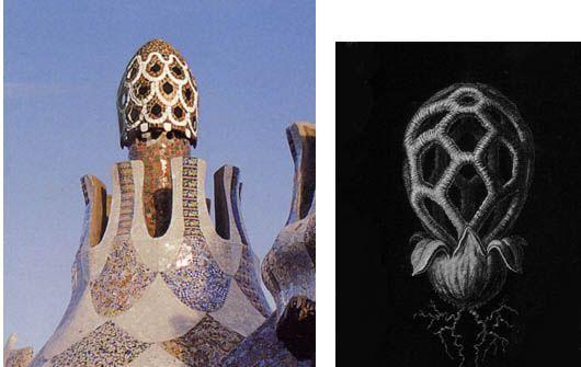 Park Güell vs kasvimuoto, Antonio Gaudi y Cornet.
