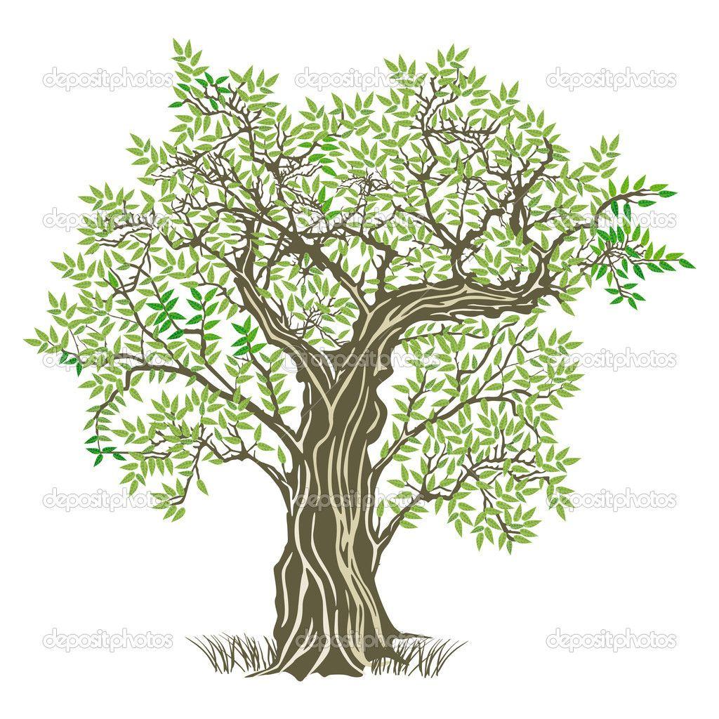 Ulivo Disegno Cerca Con Google Ulivo Pinterest Tree