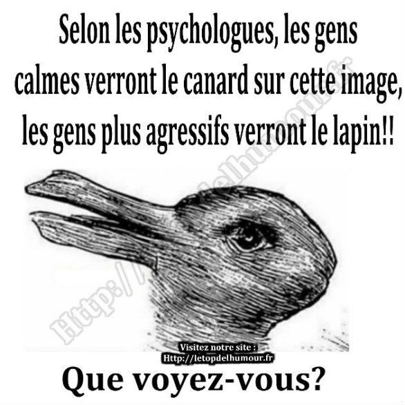 """Résultat de recherche d'images pour """"humour canard"""""""