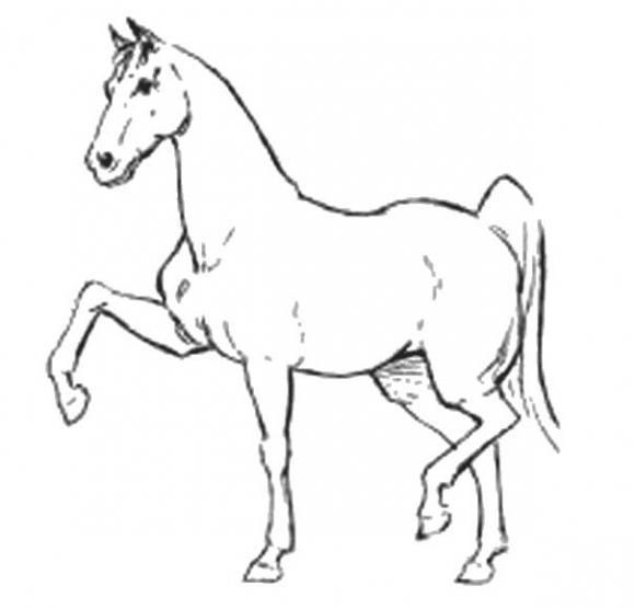 Color pages for kids How to draw a Horse Step by step penciling
