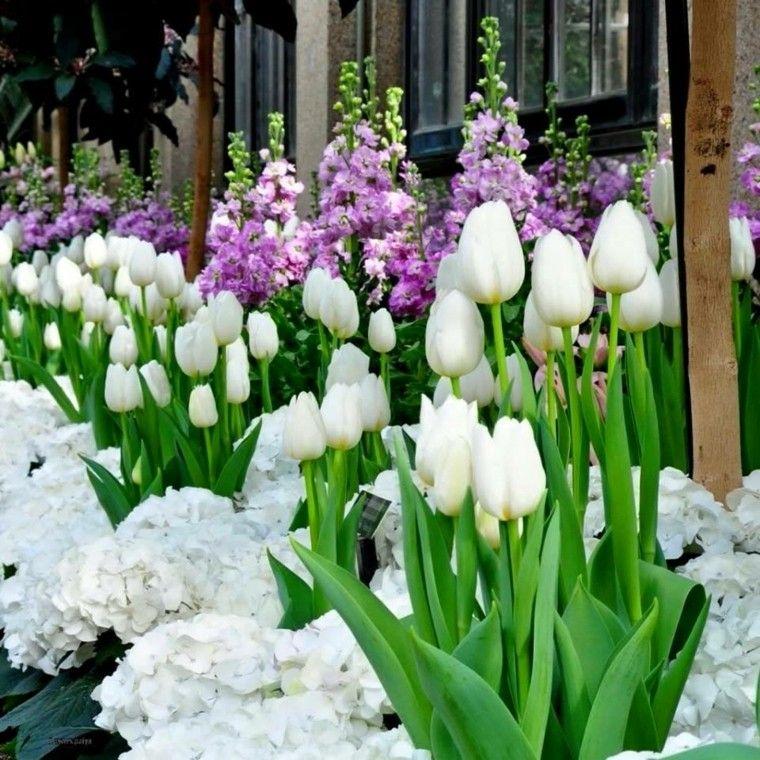 Flores Bonitas Que No Deben Faltar En El Jardin Jardines - Flores-bonitas-para-jardin