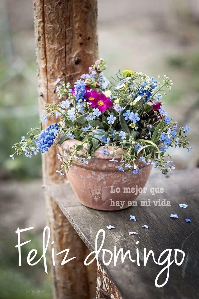 Resultado de imagem para flores de domingo