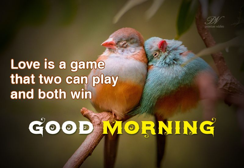 Good morning images with birds quotes in english language