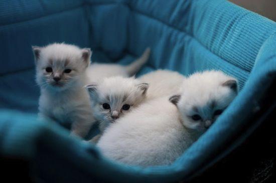 Meow meow meow!