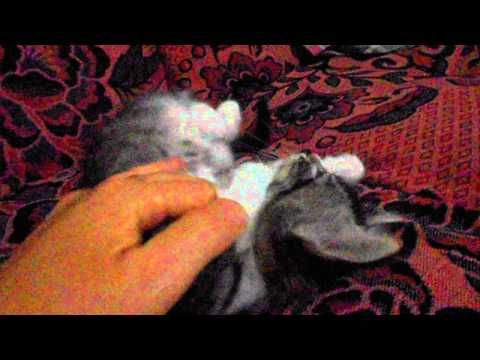 My Baby Cat Fambol Sweet Baby Youtube Baby Cats Newborn Kittens Newborn Animals