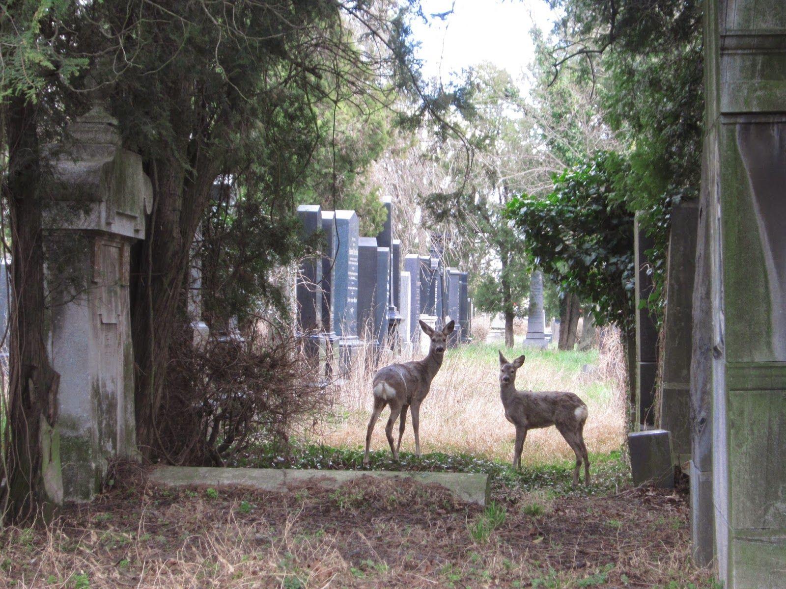 Zentralfriedhof Wien Rehe