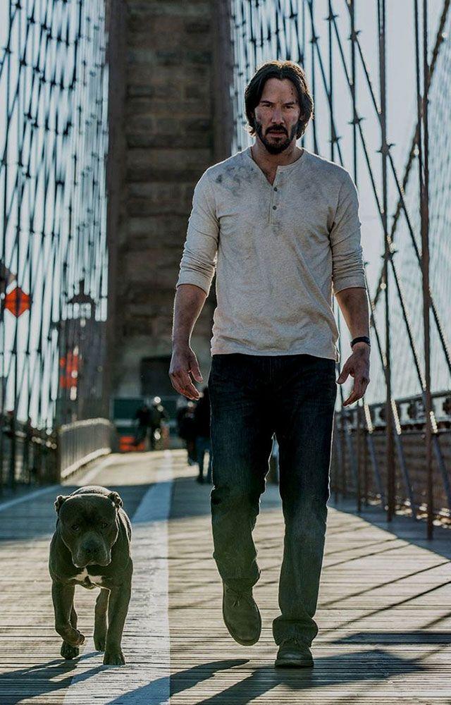 Hund John Wick 2