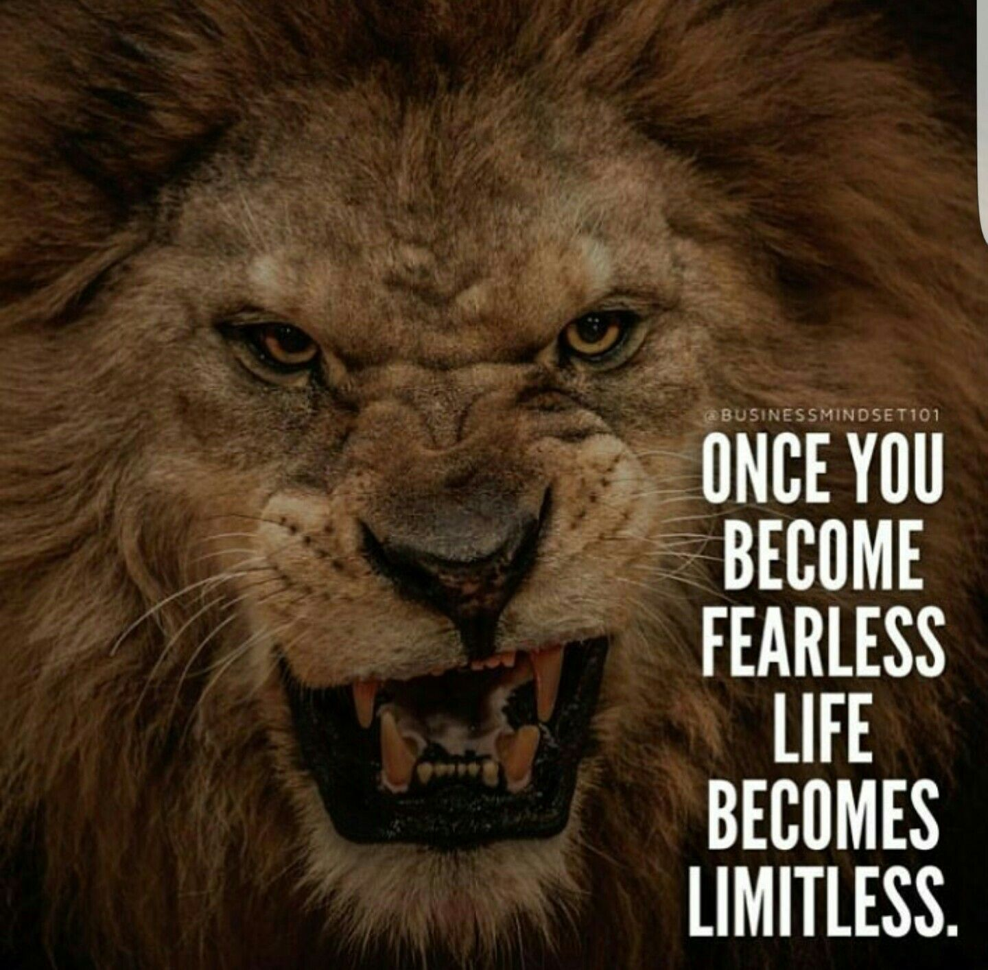 Be Fearless Lion Poster Lion And Lioness Animals Wild