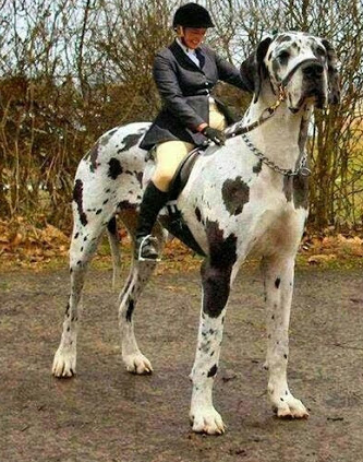 САМЫЕ БОЛЬШИЕ СОБАКИ В МИРЕ! | Самая большая собака ...