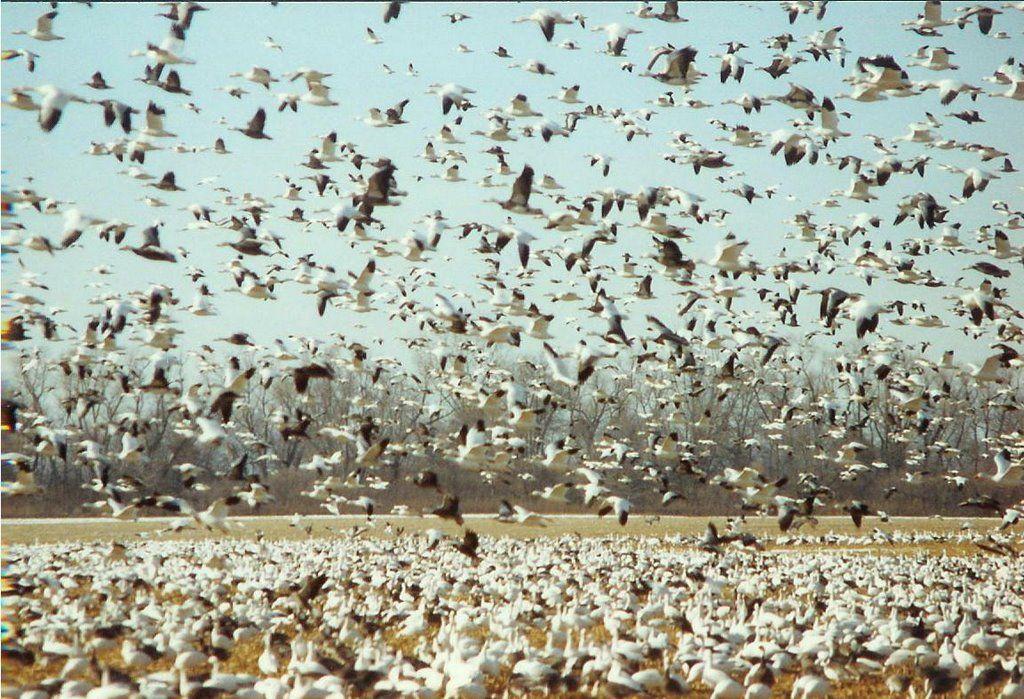 Desoto National Wildlife Refuge Desoto National Wildlife Refuge
