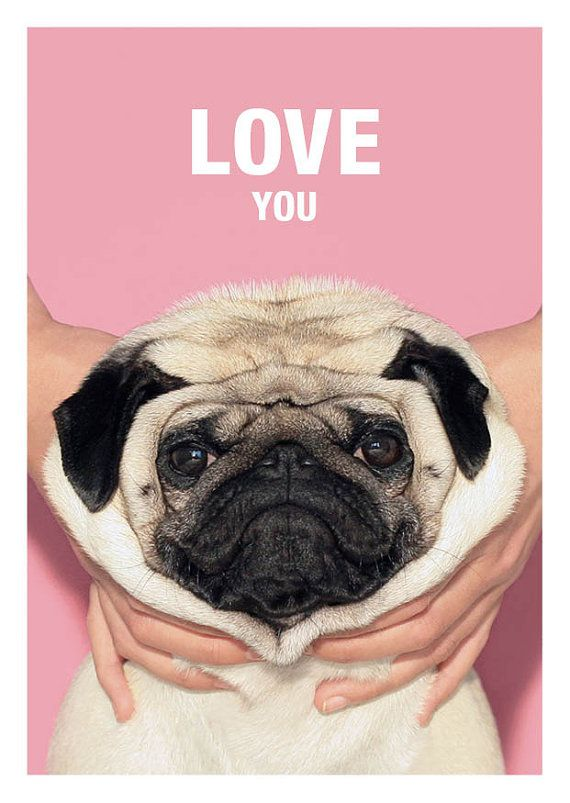 Love You Loulou The Pug Con Imagenes Animales Adorables
