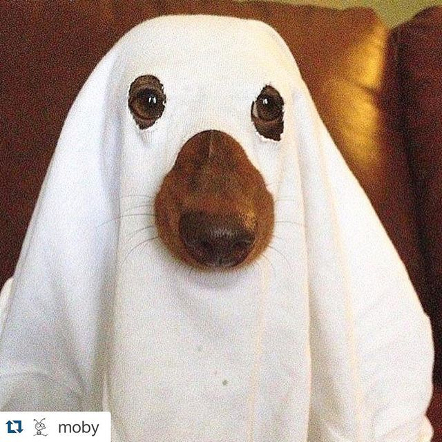 "#LOL  @moby ・・・ ""Some dogs are already getting ready for Halloween."""
