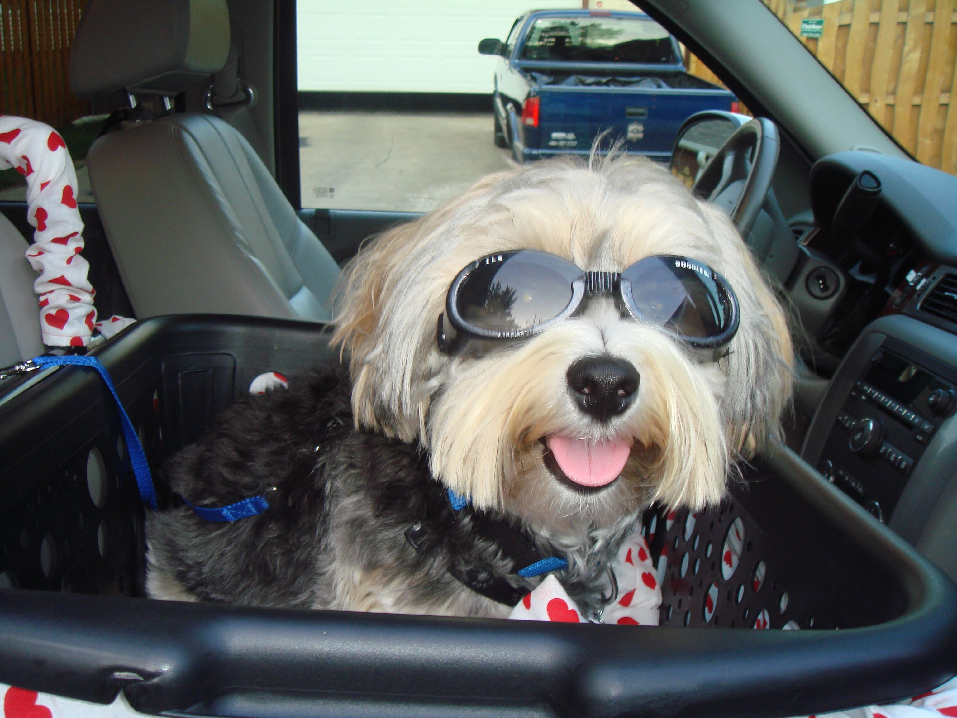 This is Colby a very cool dog and a satisfied customer