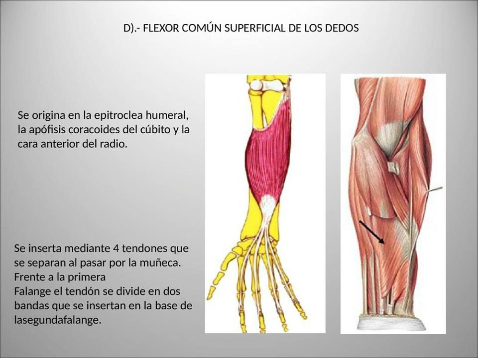 Pin By Franco Aleman On Musculos Miembro Superior Health Fitness Medical Medicine