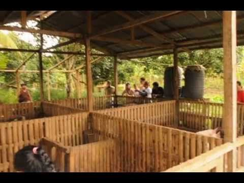 How To Build A Pig Pen Design Organic Hogs Youtube Natural