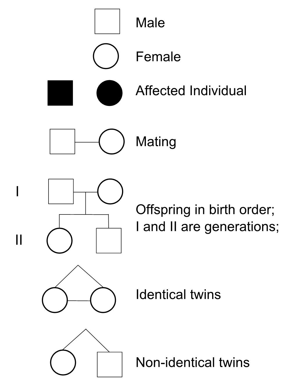 Pedigree Worksheet Interpreting A Human Pedigree ...