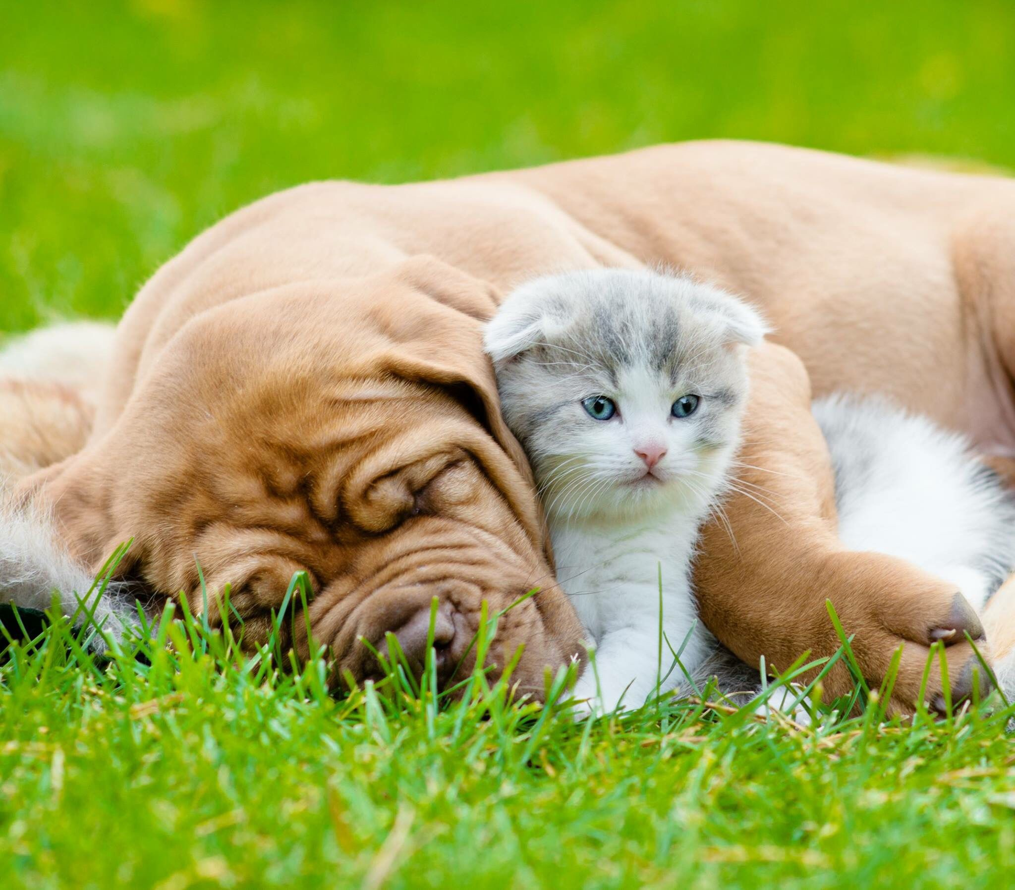 Dog Sleeping Kitten With Images Cute Animals Puppies Puppy Snuggles Cute Animals With Funny Captions