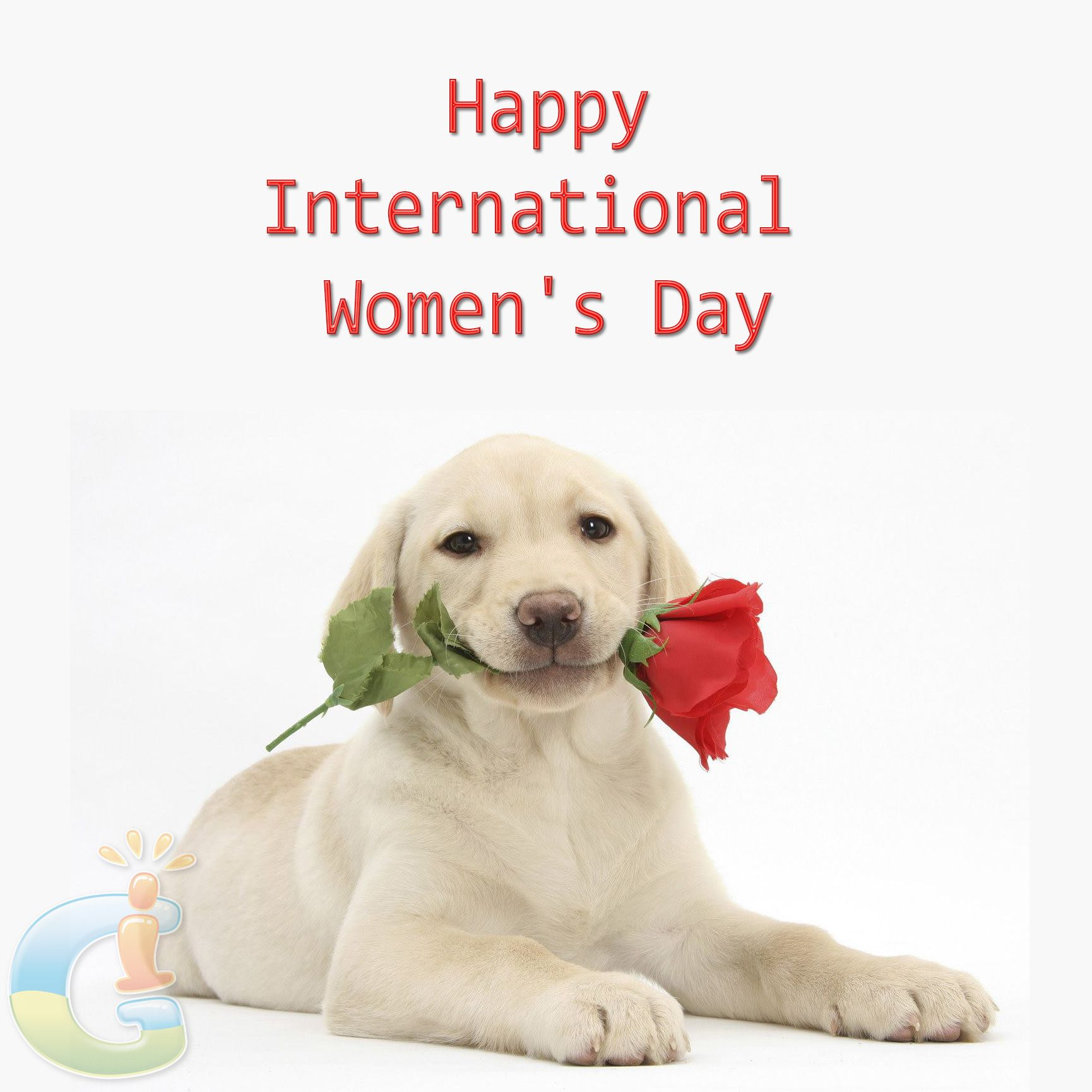 Image result for labrador with flowers  for international women's day