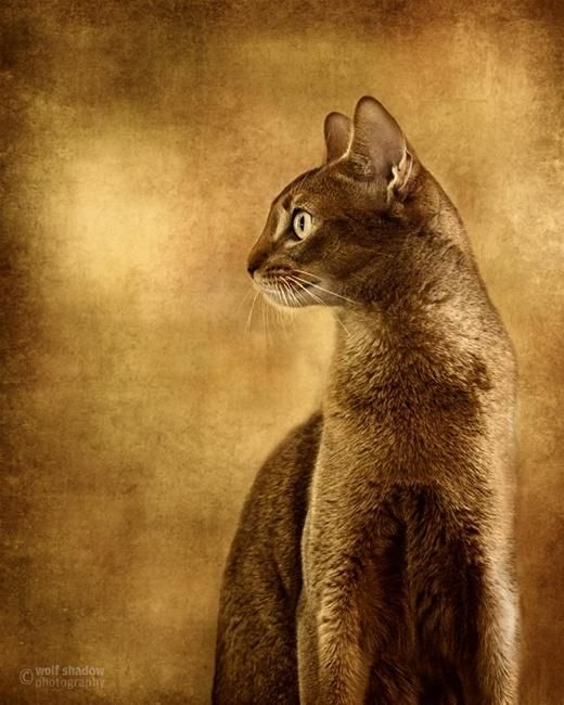 Thousands of years ago, cats were worshipped as gods.  Cats have never forgotten this. --Unknown