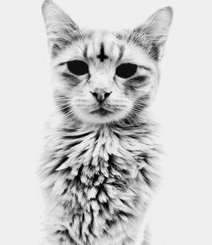Výsledek obrázku pro satanism cat