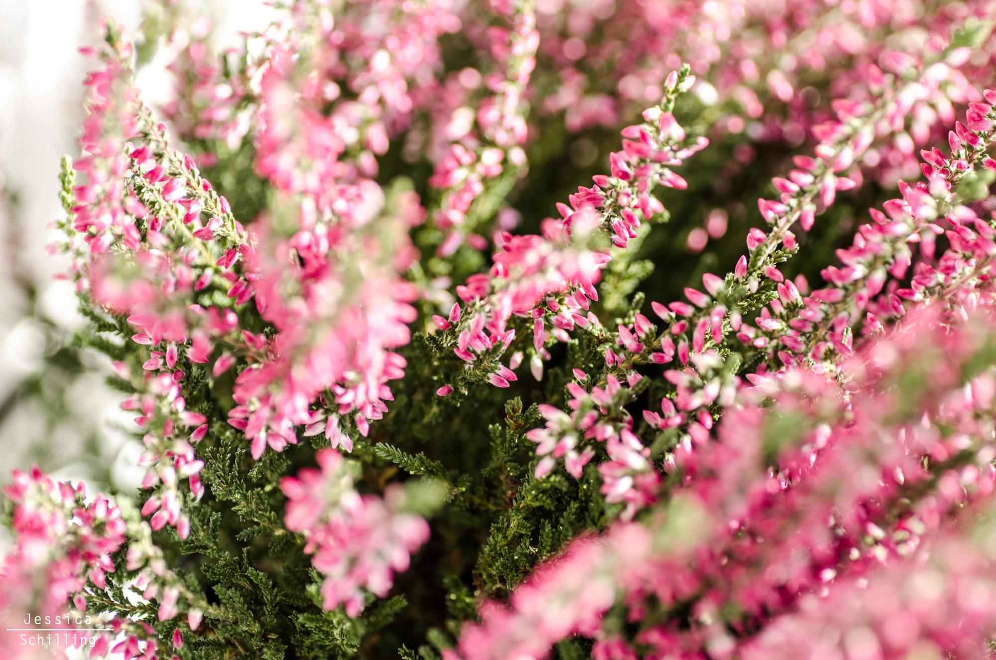 http://jschillingphoto.de/ flower, blume, winter, frost
