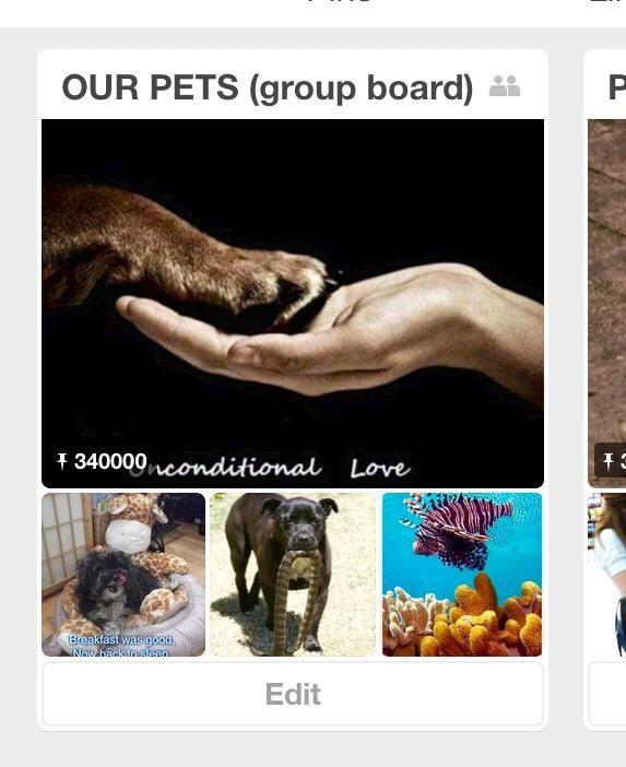 340,000 pins by pet lovers! https://www.pinterest.com/joannerighetti/our-pets-group-board/…