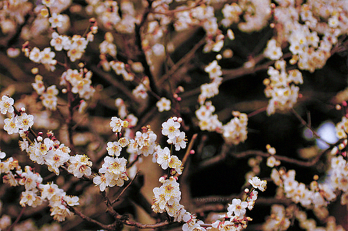A Spark Of Life Nature Cherry Blossom Images Blossom Cherry Blossom