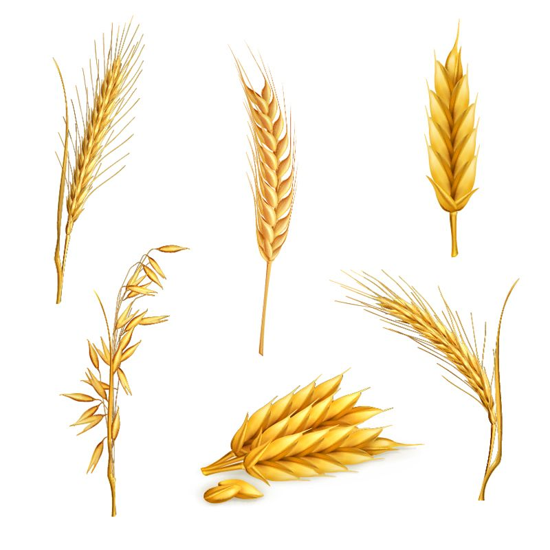 Wheat Stalk Free Clipart Clipart Wheat Tattoo Wheat Drawing Wheat Vector
