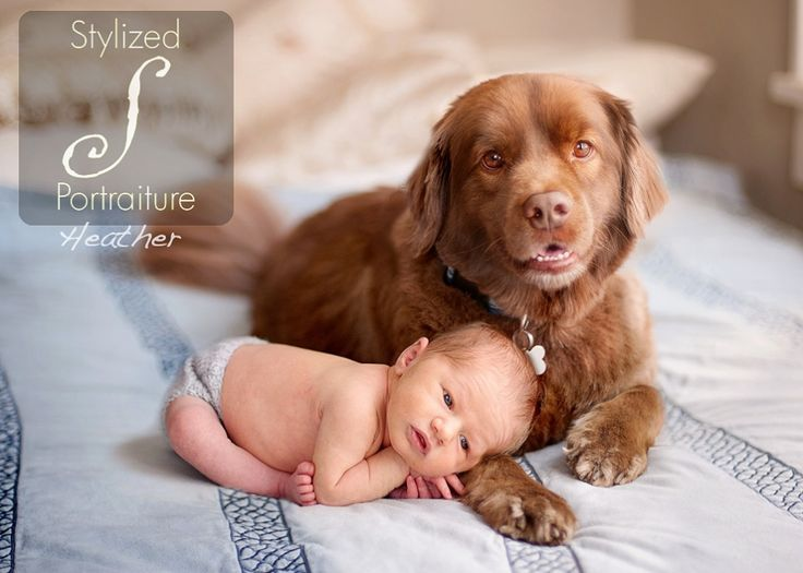 Cute Babies With Even Cuter Dogs Baby