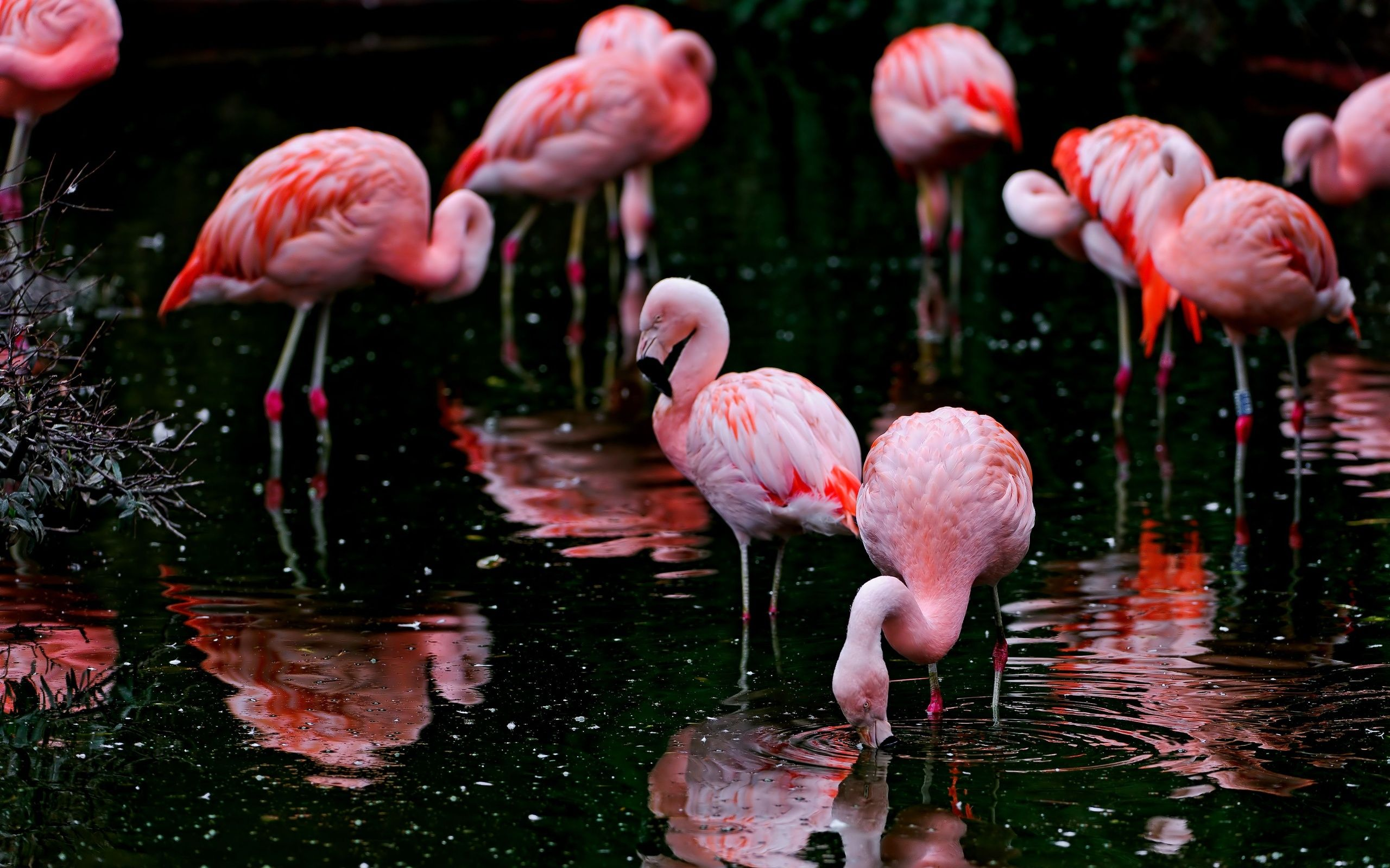 Flamingo HD background wallpaper Animal Backgrounds