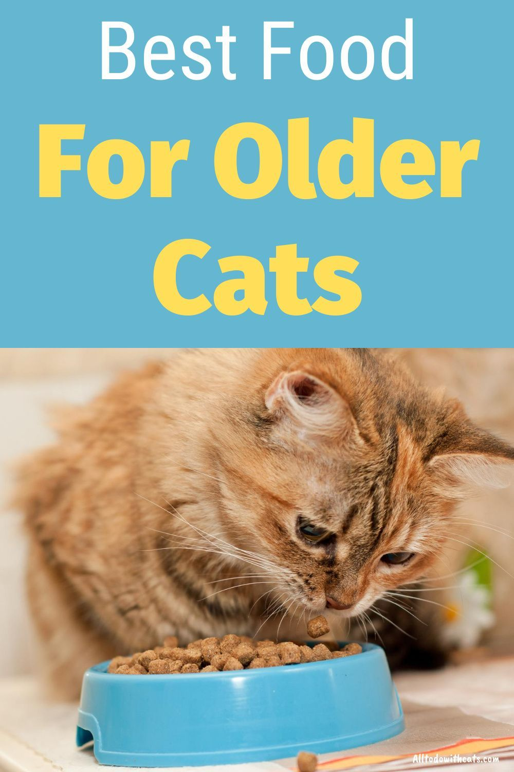 What Is The Best Cat Food For Older Cats Feeding Your Senior Kitty In 2020 Best Cat Food Cat Nutrition Cat Food