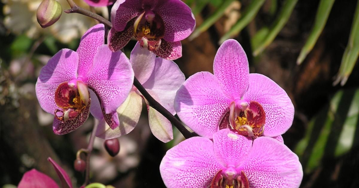 orchideen pflegen und vermehren   die besten ideen zu, Haus garten