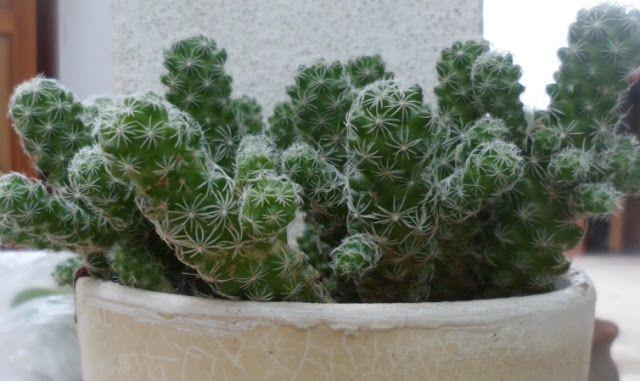 Aromito en flor: Suculentas