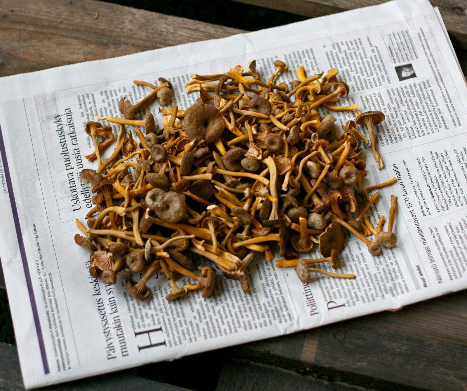 Results of the mushroom foraging: Craterellus tubaeformis =Yellowfoot = Winter mushroom = Funnel Chanterelle = suppilovahvero