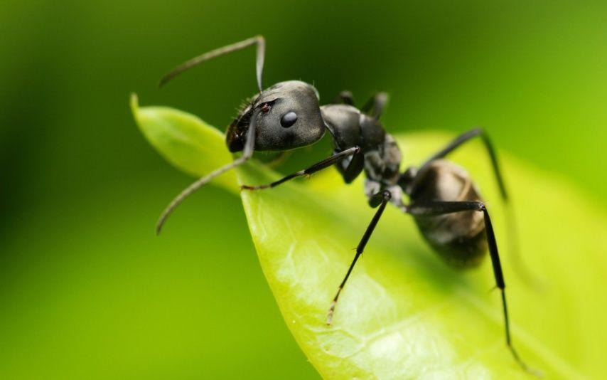 comment se d barrasser des fourmis fourmis sombre et tre l. Black Bedroom Furniture Sets. Home Design Ideas