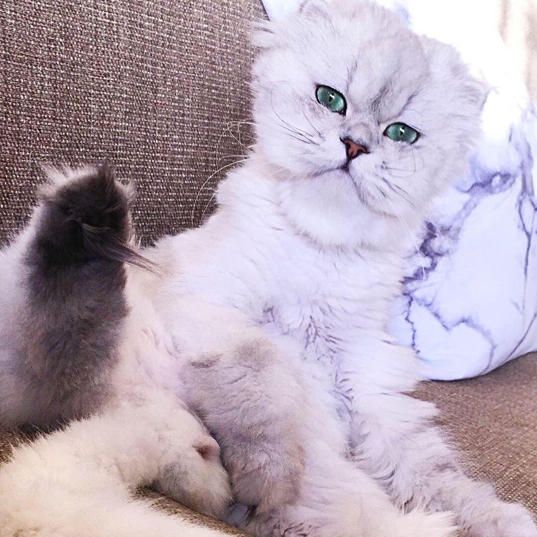 My chubby baby #cat #catsofinstagram #cats #catlovers #cats_of_instagram #catoftheday #catstagram #katt...