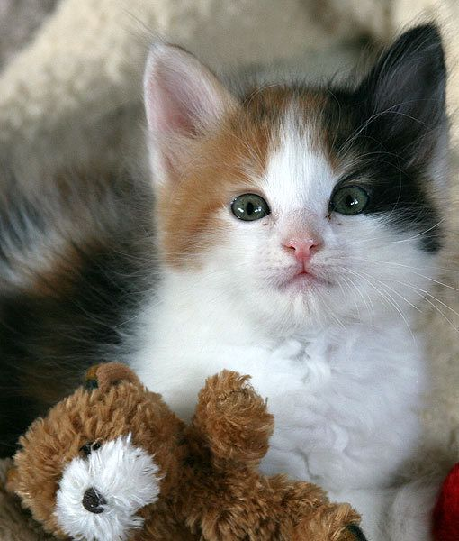 Oh My How Did You Know That His Name Was Teddy I Ve Never Told You That Before Credit Flickr User Four D Kittens Cutest Super Cute Kittens Pretty Cats