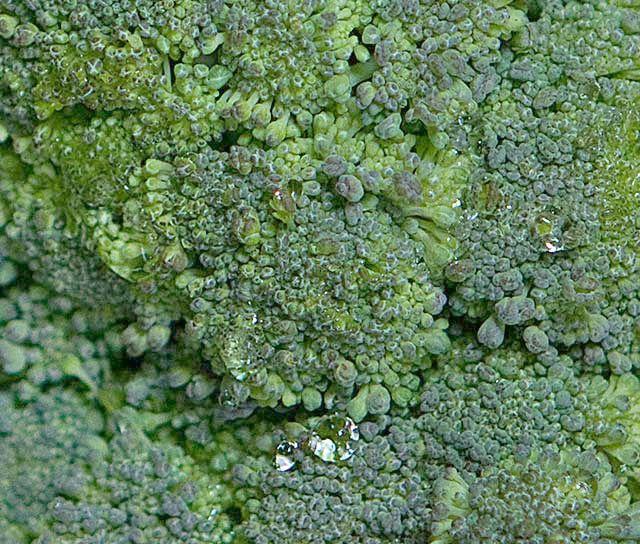 Fresh, DCFM broccoli.