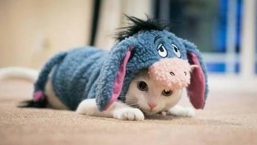 funny animal gif   Tumblr