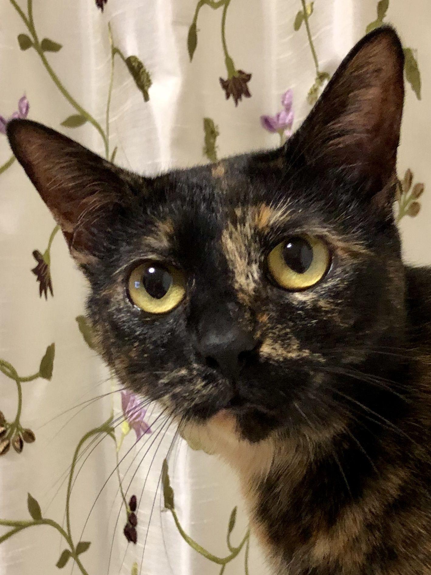 Wasabi Poppy 7/4/2019 Beautiful cats, Cute animals, Cute