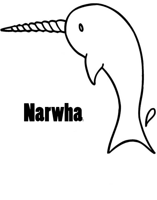 Pin by NetArt on Narwhal Coloring Pages Narwhal pictures