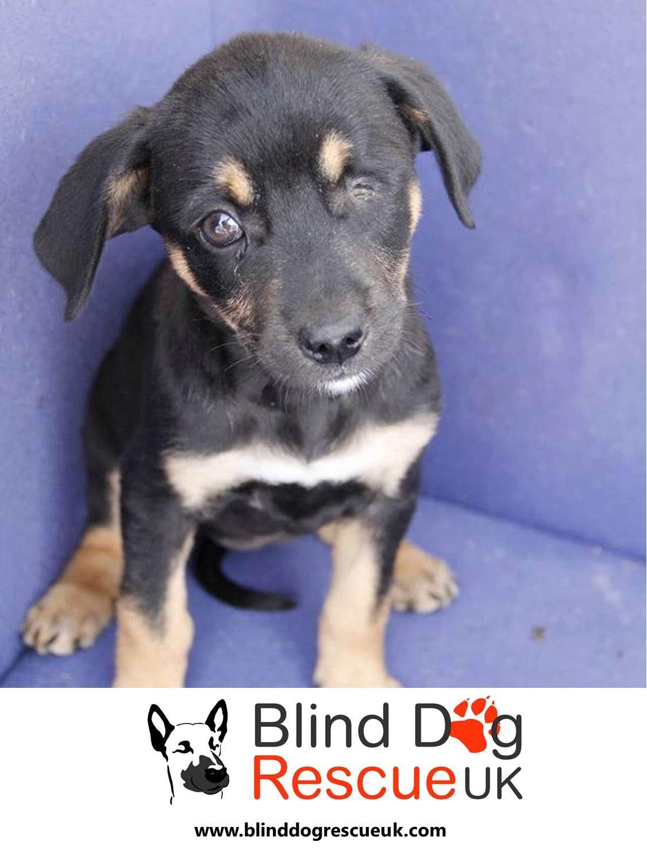 Adopt a blind dog dog rescue uk