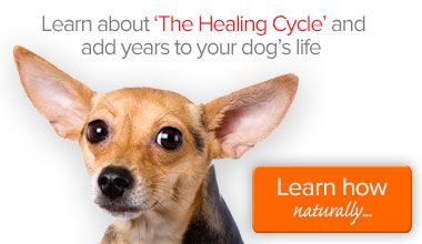 Bladder And Kidney Stones And Urine Crystals In Dogs
