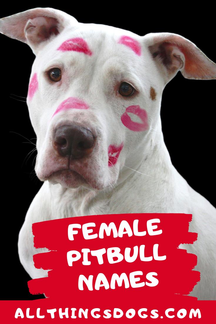 Female Pitbull Names In 2020 Pitbulls Female Pitbull Names